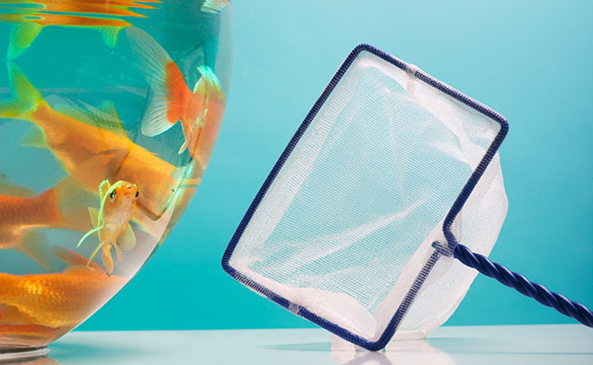 Aquarium net next to fish bowl on table