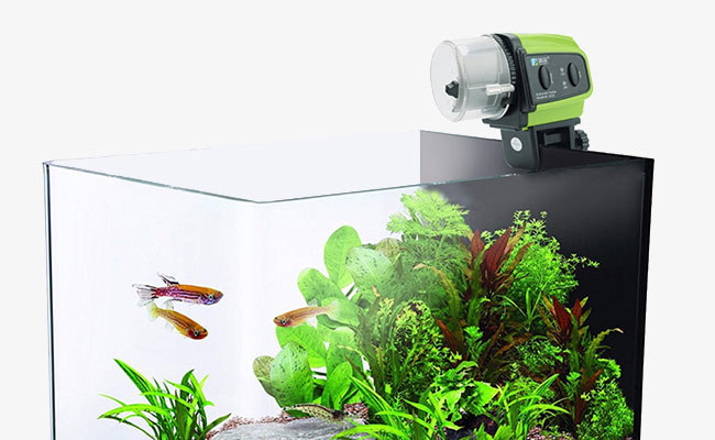 Automatic Fish Feeder Showdown! Which is best?