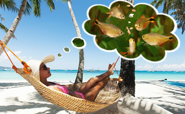 Woman relaxing in hammock on vacation while dreaming of feeding her fish at home