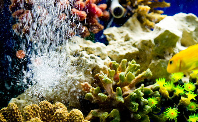 Aquarium air bubbler in saltwater marine reef tank