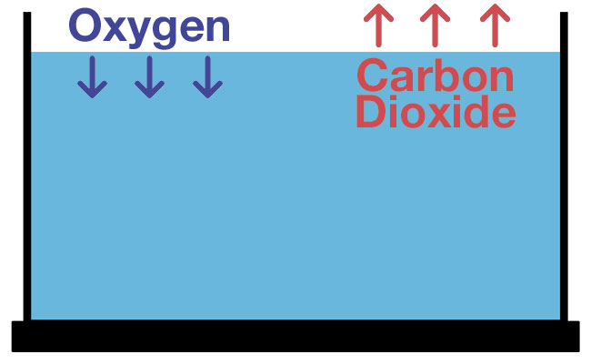 gas exchange of oxygen and carbon dioxide in aquarium at surface water diagram