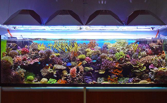 Saltwater marine reef tank