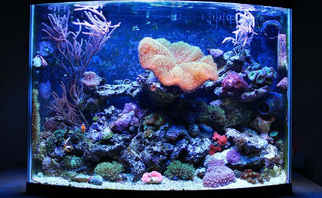 Saltwater nano reef aquarium