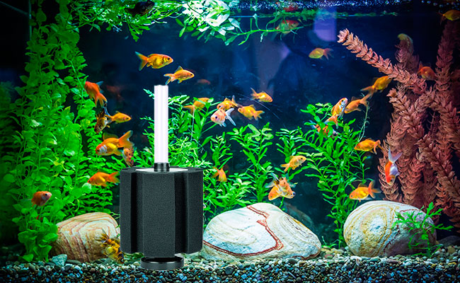 Sponge filter sitting in small aquarium with goldfish