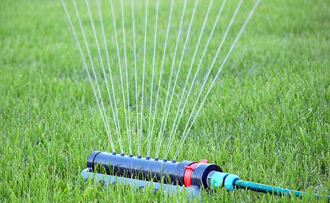 Water sprinkler attached to garden hose