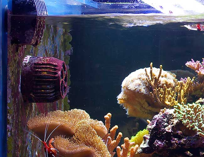 Wavemaker circulating fan in aquarium agitating water