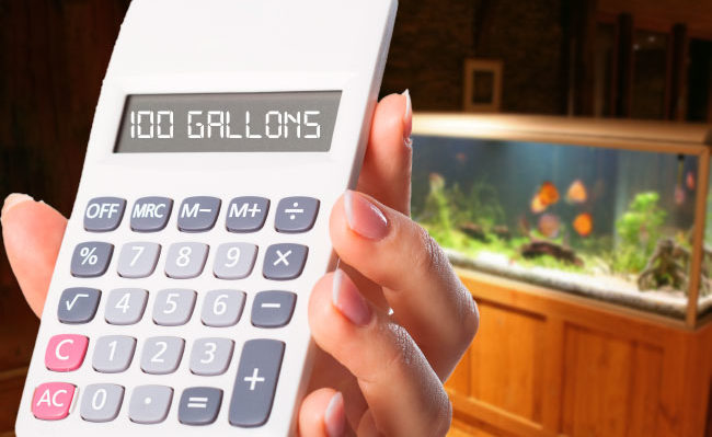 Aquarium Calculator: How Many Gallons Can Your Tank Hold?