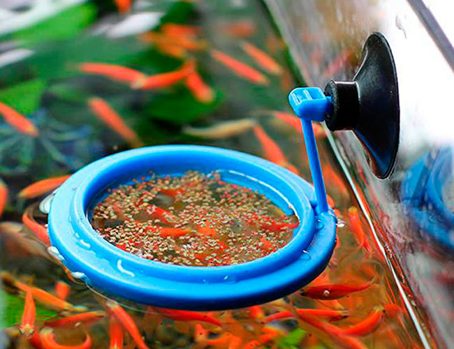 Aquarium fish feeding ring with freeze dried fish food floating on surface