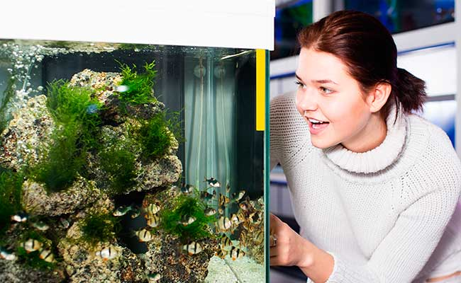 Woman looking into aquarium at fish store with an airline tube inside tank