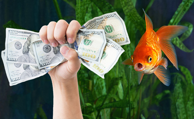 Hand with money inside fish tank