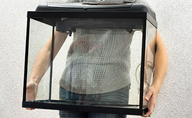 Woman carrying brand new empty glass fish tank