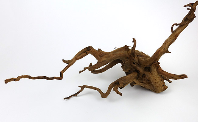 A plain piece of spiderwood used as driftwood in aquarium