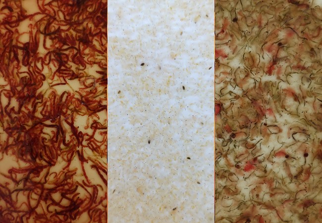 Frozen fish food that has thawed bloodworm, daphnia and artemis brine shrimp