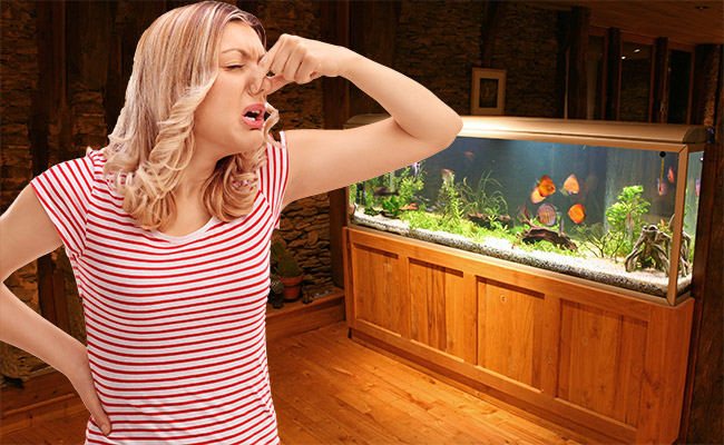Woman holding her nose because a bad smell is coming from the fish tank