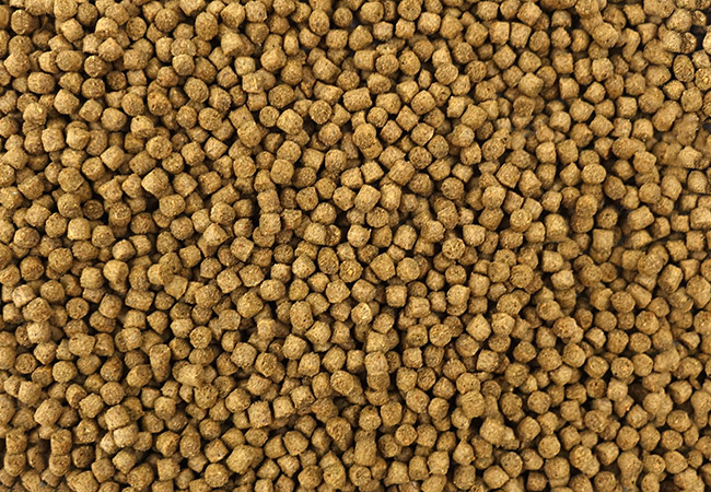 Small round fish food pellets for pet fish photo