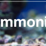 Ammonia in aquarium