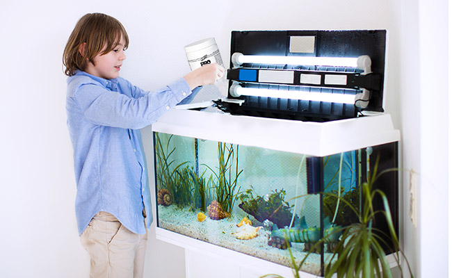 Boy using ammonia to cycle his brand new aquarium