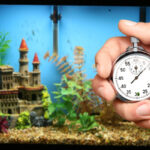 Man with stopwatch timing aquarium cycle