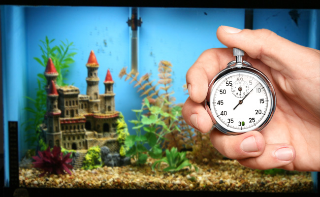 Super-Speed Secrets To A Faster Aquarium Cycle