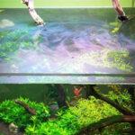 Oil slick on top of aquarium