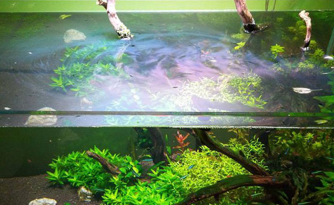 6 causes of aquarium oily films and how to fix it