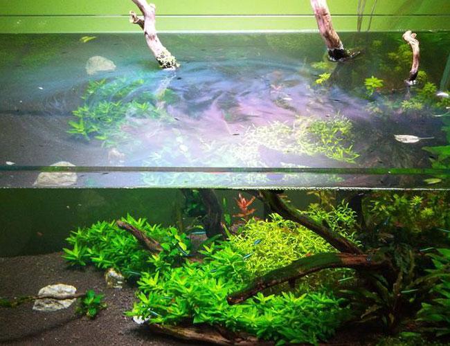 Rainbow oily greasy film on surface water in aquarium