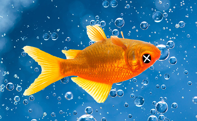 Using CO2 carbon dioxide bubbles to euthanize a fish