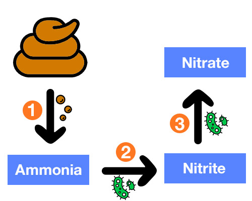 Waste breaking down into ammonia, nitrite and nitrate in aquarium diagram