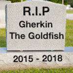 Gravestone for a euthanized pet fish that passed away