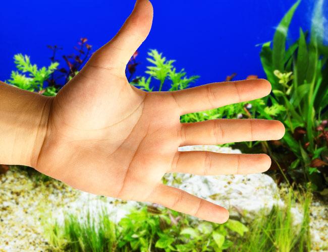 Oil from hands in aquarium