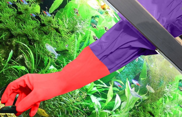 Long gloved hand reaching inside aquarium