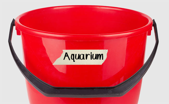 Red bucket with aquarium identification tag