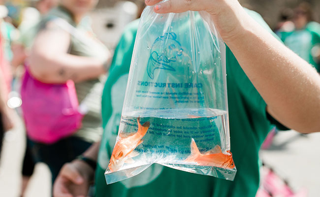 Goldfish in bag on the way to its new home