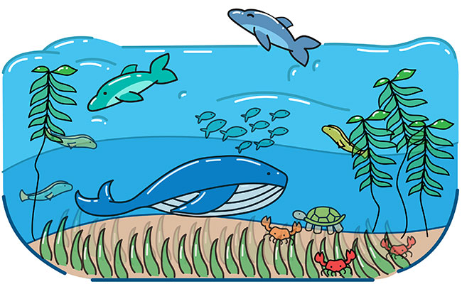Our oceans filled with fish, dolphins, turtles, whales, and crabs