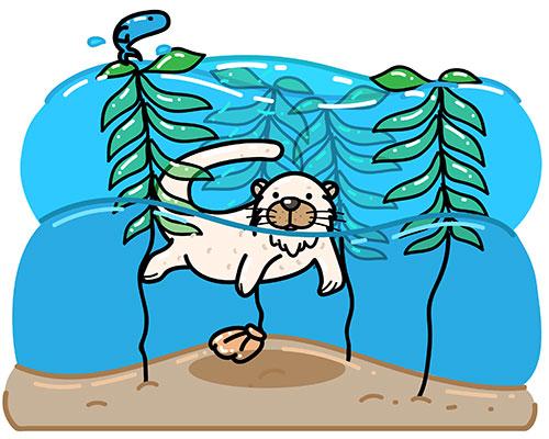 Sea otter protecting habitat