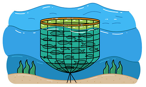 Salmon being farmed in aquaculture net in ocean