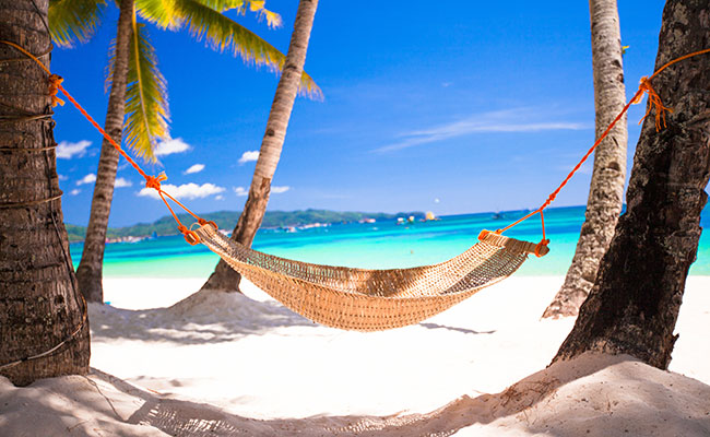 Hammock between two palm trees on beach