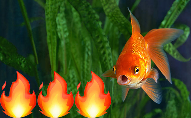 Fire in aquarium with fish because temperature is too hot