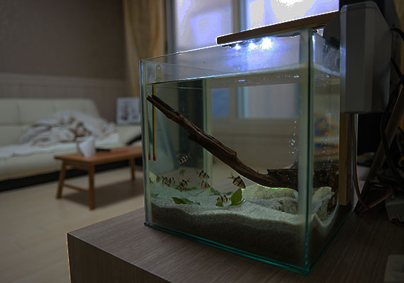 Fish Tank And Stand Cool In Summer And Warm In Winter Aquariums & Tanks