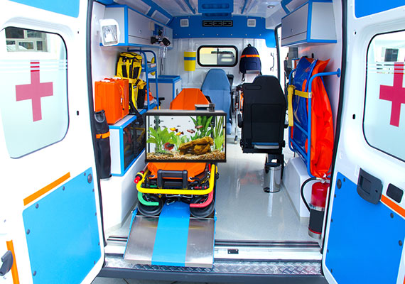 Aquarium in the back of an ambulance