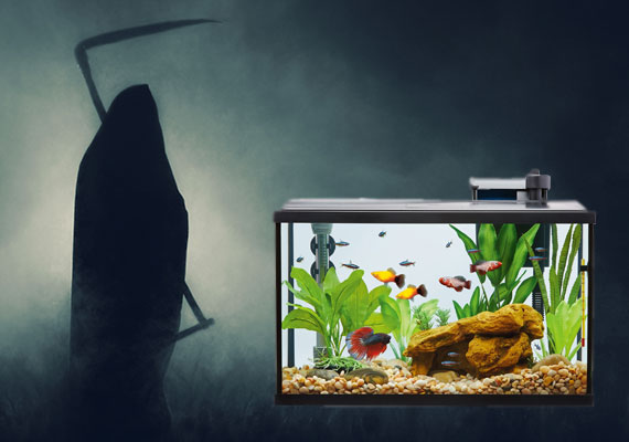 Grim reaper next to fish tank during power outage