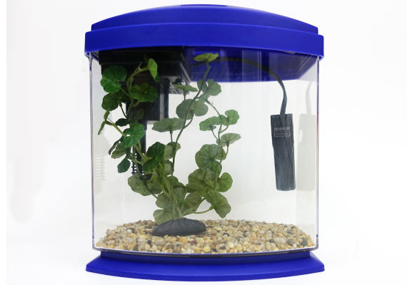 Aqueon mini small aquarium heater inside 1-gallon fish tank