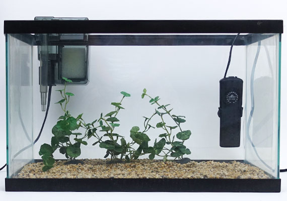 Cobalt Neotherm aquarium heater sitting inside small 10-gallon aquarium