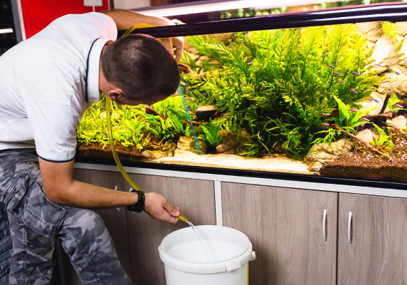 Man performing a water change on his planted aquarium with gravel vacuum used as siphon