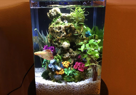 An oversized decoration making the right-size tank too small for a betta