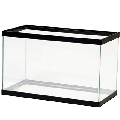 Aqueon Black 10-gallon tank a blank canvas for betta