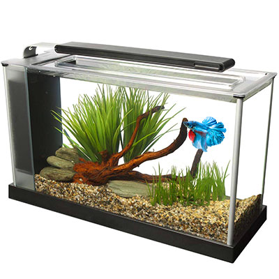 Fluval Spec V Aquarium Kit 5-gallon white best tank for betta
