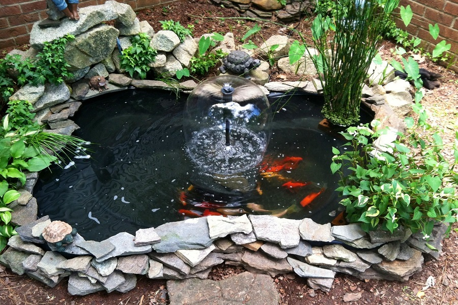 Diy Fish Pond What Do I Need To Build A Koi Pond Fishlab