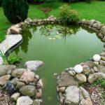 clean fish pond