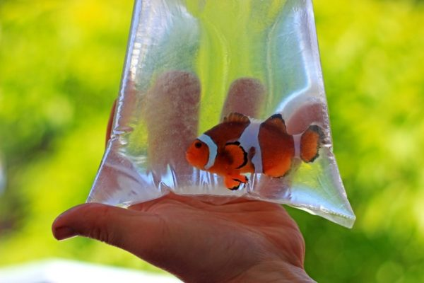 clown fish in plastic bag